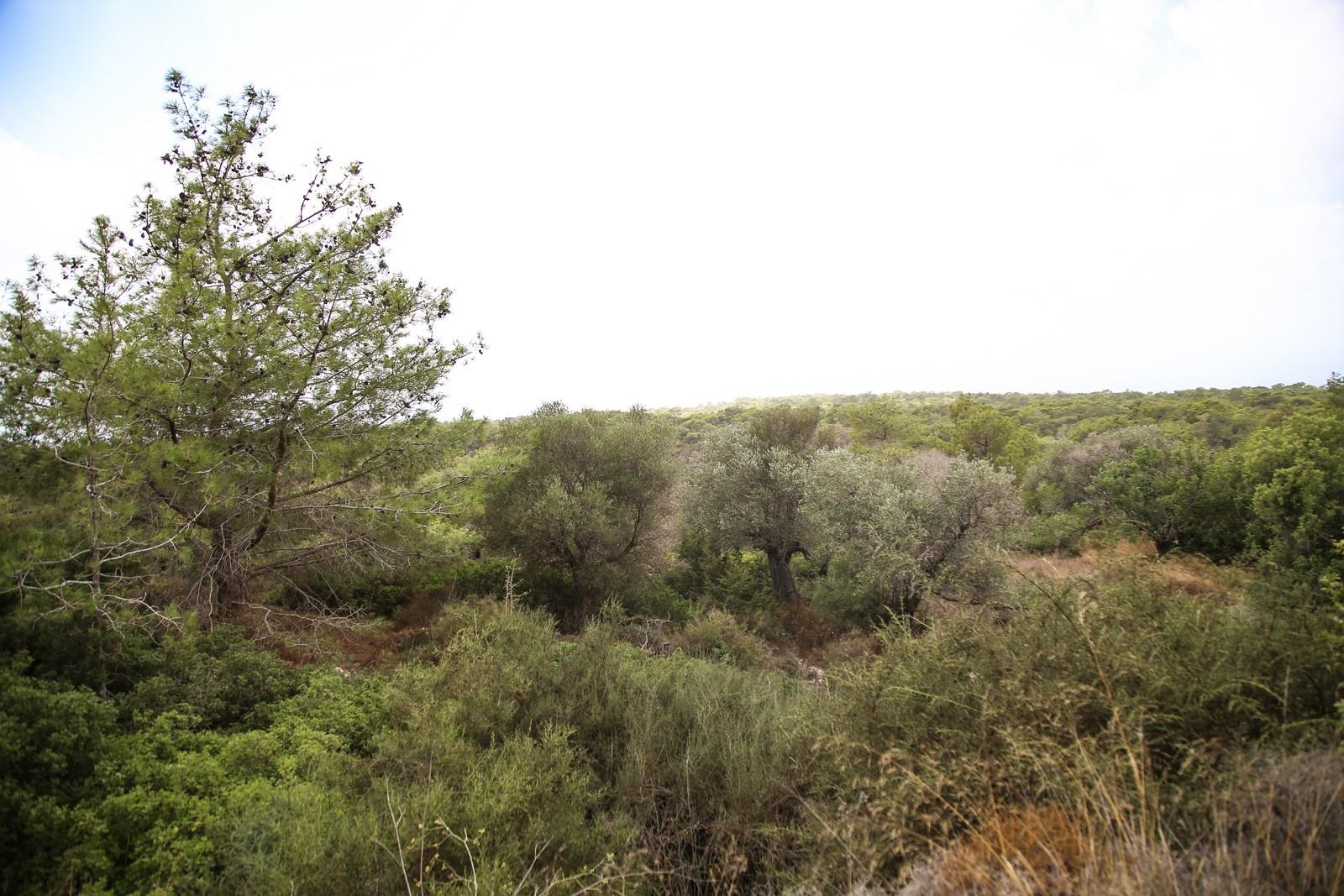#Δάσος της Πυκνής