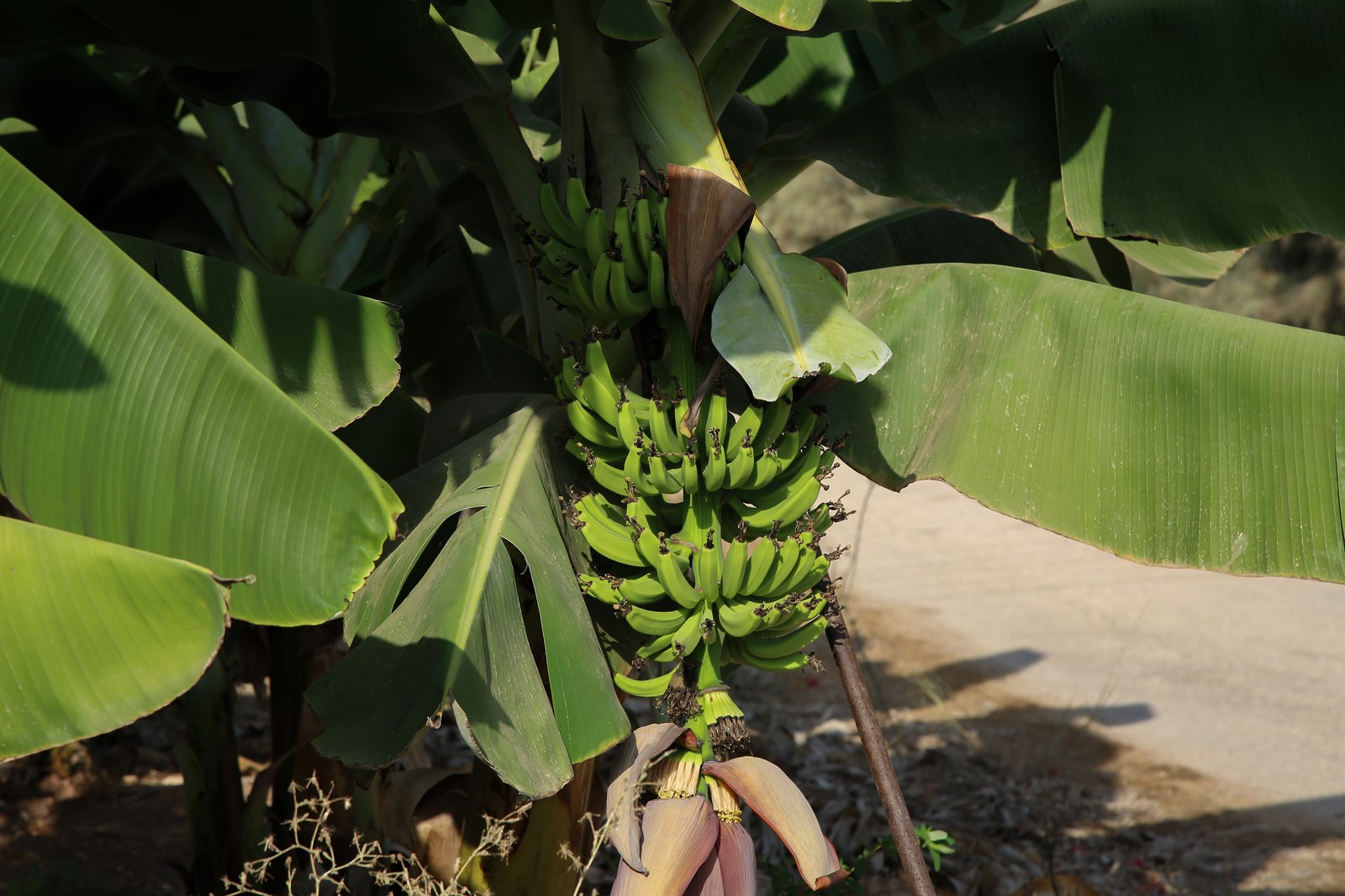 #Μπανάνες